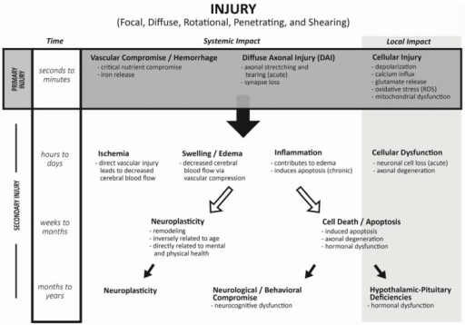 Hypothesized model for progression from Primary to Secondary Injury after trauma to the central nervous system.