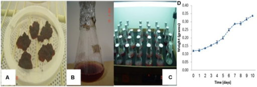 Dark skin derived callus cultures and its subsequent cell suspension cultures for in vitro proliferation. (A) Initiated callus cultures, (B) development of suspension culture, (C) cell suspension cultures and their proliferation using 250 mL Erlenmeyer flasks and (D) cell growth curve across culture period.