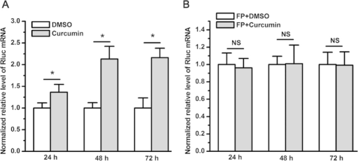 Curcumin did not affect the decay of renilla luciferase mRNA transcribed from pRL-SV40.(A) Curcumin significantly increased renilla luciferase mRNA levels compared with DMSO (*P < 0.05). (B) Two hundred nM of FP completely abrogated the curcumin-mediated increase in renilla luciferase mRNA levels (NS, not statistically significant). The renilla luciferase mRNA level was normalized to that of ACTB and subsequently normalized to 1 relative to the control treatment with DMSO. The data in all of the bar graphs were plotted as the mean ± SEM.