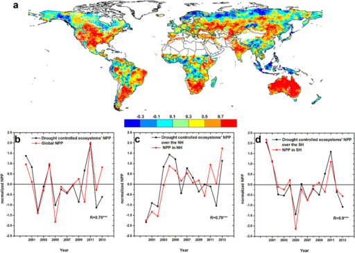 Role of drought-controlled ecosystems in interannual variation in global NPP.(a) Spatial pattern of maximum correlation coefficients (Pearson coefficient, R) between annual NPP and multi-timescale SPEI. The SPEI timescales range from 12 to 24 months. Red areas represent robust relationships at the 95% confidence level. (b) Variations in normalized NPP in drought-controlled ecosystems and global NPP. Drought-controlled ecosystems were defined as those ecosystems with a significant relationship between NPP and SPEI (P < 0.01). Variations in normalized NPP in drought-controlled ecosystems and NPP over (c) Northern Hemisphere and (d) Southern Hemisphere. ***Denotes 99% confidence level estimated with a t-test. This map was created using the ArcGIS 10.2 (http://www.esri.com/software/arcgis/arcgis-for-desktop).
