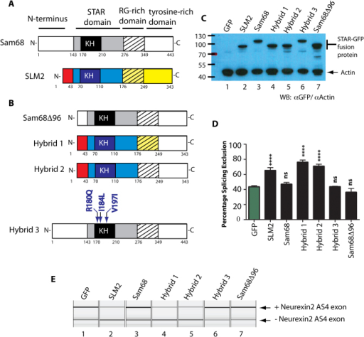 The Star Domain Of Slm2 Establishes Substrate Specifici Open I