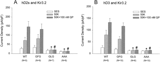 Functional characterization of GIRK2 mutants in CHO cells. Bars represent mean (±SEM) current densities at −100 mV from CHO cells transfected with the GIRK2 constructs and either the human D2S dopamine receptor (A) or the human D3 dopamine receptor (B). Wild-type and mutant GIRK2 constructs (non–EGFP-tagged forms) were cotransfected with a 10-fold excess of dopamine receptors. Whole-cell voltage-clamp recording was done 24–36 h after transfection. The numbers in parenthesis represent the number of cells tested in each case. The GLG and AAA mutants exhibited significantly reduced inward currents compared with either wild type (WT) or GFG human GIRK2 in an external solution containing either 50 mM potassium (50 K-ES, hatched bars) or dopamine receptor agonist quinpirole (100 nM QP, cross-hatched bars) (*,#P < 0.01, Student's t test).