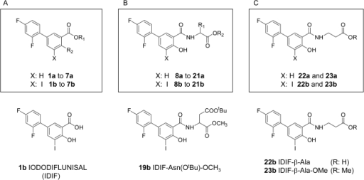 Synthesis of diflunisal and iododiflunisal analogs.A) Modifying functional groups of diflunisal; B) Conjugation to α-amino acids; and C) Conjugation to β-alanine derivatives.