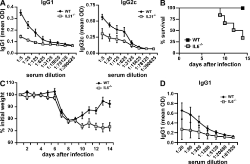 Role of IL-21 and IL-6 in influenza virus infection. (A) Wild-type and IL-21−/− mice were infected i.n. with a sublethal dose (0.1 LD50) of active PR8 virus, and after 2 wk, influenza-specific IgG1 and IgG2c levels in serum were determined by ELISA. (B–D) Wild-type and IL-6−/− mice were infected i.n. with a sublethal dose (0.05 LD50) of active PR8 virus. Animals were monitored daily, and the time to death was recorded as the day after infection. Kaplan-Meier survival curves were generated using Prism 4.03 software (GraphPad Software, Inc.), and the log-rank test was used to determine the significance of differences between the strains (B). Weight was also measured daily in the surviving mice. The percentage of the initial weight is shown (C). Serum levels of virus-specific IgG1 were determined in the surviving mice (six out of six for wild-type mice and two out of six for IL-6−/− mice) 14 d after infection (D). Data represent groups of five (A) or six (B–D) mice from one experiment out of two performed. Error bars indicate SD.