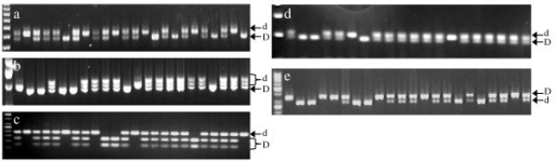 F2 individuals screened with SCAR markers on agarose gel. (a) D-Scar0 on 3% agarose gel (b) D-Scar1 on 2% agarose (c) D-Scar3 digested with AccI, on 2% agarose gel (d) D-Scar6 on 3% agarose gel (e) D-Scar7 digested with MseI, on 3% agarose gel. Specific band for each allele is indicated (d for normally-acid and D for low-acid).