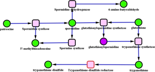 Green nodes are metabolites identified in the dataset. Purple nodes are the ones inferred by our gap filling method. Square nodes are reactions nodes, when the border is red it means that the reaction can occur in both directions. This pathway is part of amino acids degradation. The sub-network reported here was produced from the current version of Trypanocyc. It is notable that this version has not benefited from expert pruning so the reactions catalysed by spermine synthase and spermidine dehydrogenase have not been reported in T. brucei. Furthermore the reaction catalysed by trypanothione reductase, usually converts the oxidised form of trypanothione to its reduced form, which is then involved in multiple cellular reductions prior to its being enzymatically reconverted to the reduced form