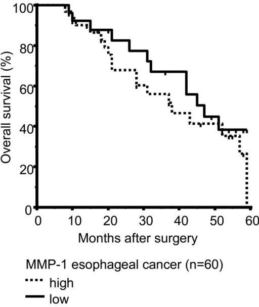 Overall survival curves calculated by Kaplan-Meier method in Barrett associated adenocarcinomas. High levels of MMP-1 expression in EAC (n = 60) were not found to be associated with poorer survival (p = 0.307). The times of the censored data are indicated by short vertical lines.