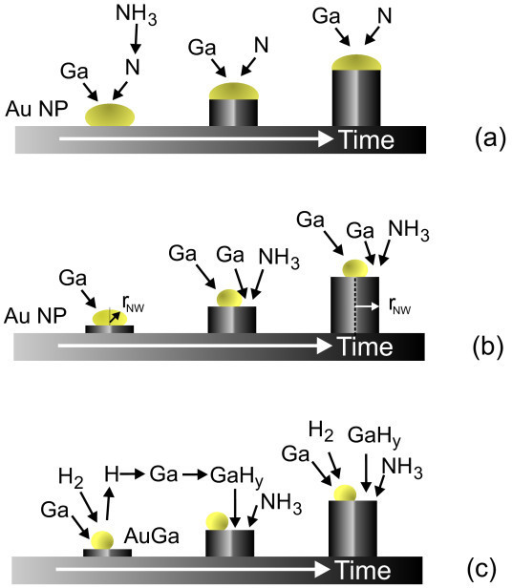 Growth mechanisms of GaN NWs by VLS (a), self-regulated, diameter selective mechanism [17](b), particle mediated, hydride-assisted growth via the catalytic dissociation of H2 at Au NPs (c).