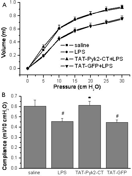 Effects of TAT-Pyk2-CT on reduced transthoracic static compliance caused by intratracheal administration of LPS. Mice were pretreated with 10 mg/kg TAT-Pyk2-CT or TAT-GFP 1 h before saline or 10 mg/kg LPS challenge, and (A) pressure-volume (P-V) curves were generated at 18 h after challenge. B. Decrease in transthoracic static compliance caused by LPS treatment. Measurements were means ± SEM at 10 cm H2O for each group (n = 6). #P < 0.05 vs. saline control group; *P < 0.05 vs. LPS alone group.