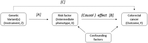 Directed acyclic graph (DAG) showing the instrumental variable assumptions underpinning our Mendelian randomisation study (note the instrument is not allowed to have a direct effect on the outcome, hence this line is dashed).Instrumental variable models use associations C and A to estimate the causal effect of a risk factor on an outcome (B).