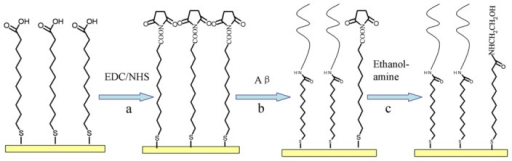 The procedure for the immobilization of Aβ. (a) The self-assembled monolayer (SAM) of MUA surface was activated with standard amine coupling chemistry using EDC/NHS; (b) The activated surface was covered with a fresh Aβ solution to form a bond between the amine group on the peptide and the carboxylic group on the MUA surface; (c) The remaining activated surface groups were blocked using ethanolamine.