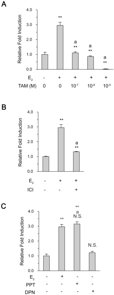 "Activation of vav1 promoter by ERα.MCF7 cells were transfected with the vav1 luciferase reporter gene, and cultured in RPMI 1640 medium for 24 h. The cells were pre-treated with increasing concentration of Tamoxifen (A) or ICI 182 782 at 4×10−7 mol/L (B) for 30 min, followed by E2 treatment for another 48 h. Or the cells were treated with E2 (10−7 mol/L), PPT (10−7 mol/L), or DPN (10−7 mol/L) for 48 h (C). The DMSO treatment served as solvent control. The induction fold of luciferase activity was measured as described in Methods, and plotted as the ratio to that of the control in y-axis. The data represented the mean±S.D. of three independent experiments. ""**"" and ""N.S."" indicate P<0.01 and P>0.05, respectively, versus DMSO treatment by unpaired student T test; ""a**"" and ""aN.S."" indicate P<0.01 and P>0.05, respectively, versus E2 treatment."