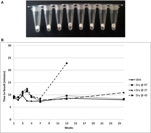 (A) Beads of dried LAMP reagents in PCR tubes. (B) Feasibility data showing stability based on TTR of LAMP reagents in dried format stored at the indicated temperatures compared to wet enzyme stored at −20° over 180 days.