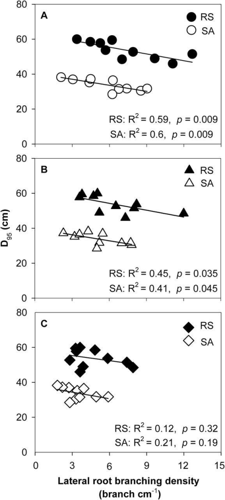 Correlation of rooting depth (D95) and lateral root-branching density in crown roots (A), primary roots (B), and seminal roots (C) in the field in RS and SA at anthesis. Each point is the mean of four replicates of each genotype.