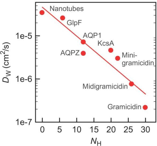 DW depends on the number NH of hydrogen bonds that single-file water molecules may form with pore-lining residuesDW in nano-tubes assumes z = 2.6 Å and k0 = 0.1 p s−1 (13). pf for the bacterial potassium channel KcsA was calculated by applying Eq. 4 to our previously published stopped-flow curves (18). Equation 1 served to compute DW from the pf values of gramicidin, midigramicidin, minigramicidin (17), and KcsA.