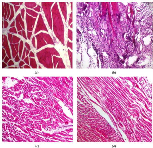 Histopathological architecture of heart of different experimental groups.