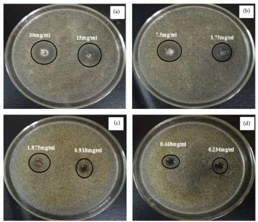The antimicrobial activity of zinc oxide nanotubes against Staphylococcus aureus using disc diffusion method. ((a), (b), (c), and (d)) Different concentrations of the synthesized ZnO.
