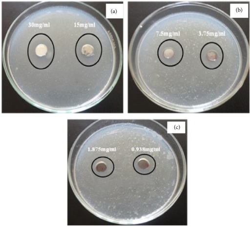 The antimicrobial activity of zinc oxide nanotubes against Bacillus subtilis using disc diffusion method. ((a), (b), and (c)) Different concentrations of the synthesized ZnO.