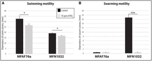 NO2 decreases P. fluorescens motility. Airborne MFAF76a and clinical MFN1032 P. fluorescens strains were exposed in triplicate to 45 ppm of NO2(). Swimming (A) and swarming (B) motilities were assayed on DMB-swim/swarm plates after 24 h incubation. The motile bacterial movement was evaluated in three independent experiments with three replicates. The data were compared with control exposed to synthetic air (). Obtained results are presented as average values ± SEM. Statistical significance was calculated by the non-parametric Mann-Whitney-Test p < 0.05 (*) and < 0.001 (***).
