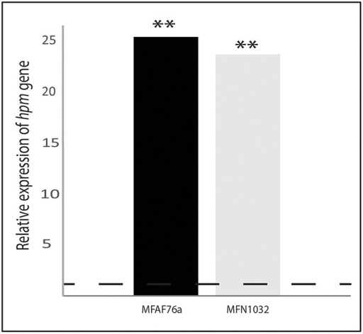 Transcription of hmp is increased in response to NO2 exposure. The nucleotide sequences of the hmp-homolog gene in P. fluorescens strains were obtained using the non-annotated genome drafts of airborne P. fluorescens MFAF76a () and clinical MFN1032 (). The GenBank accession numbers of hmp nucleotide sequences are listed in Table S2. Quantification of mRNA level was assayed using qRT-PCR on RNAs extracted from NO and synthetic air-exposed P. fluorescens. The PCR reactions were performed in triplicate and the standard deviations were lower than 0.15 Ct. Statistical analysis used pairwise strain comparisons (t-test) p < 0.01 (**). Dotted line shows the gene expression in air-exposed control.