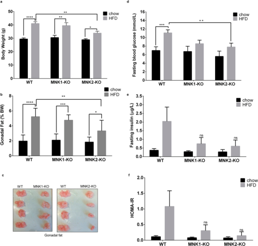 Responses of MNK1-KO and MNK2-KO mice to high fat feeding.(a) Bodyweight of WT, MNK1-KO and MNK2-KO mice after 20 weeks on either chow or a high fat diet (HFD) (45% kcal from fat) (n = 6–9). Data are mean ± SEM (two-way ANOVA followed by Tukey's post test) *P < 0.05, **P < 0.01, ****P < 0.0001. (b) Gonadal adipose tissue weight expressed as a percentage of bodyweight (n = 6–9). Data are mean ± SEM (two-way ANOVA followed by Tukey's post test) *P < 0.05, **P < 0.01, ***P < 0.001, ****P < 0.0001. (c) Representative images showing gonadal fat depots from WT, MNK1-KO and MNK2-KO mice after 20 weeks HFD. (d) Fasting blood glucose of WT, MNK1-KO and MNK2-KO mice after 20 weeks on either chow or a HFD (n = 6–9). Data are mean ± SEM (two-way ANOVA followed by Tukey's post test) *P < 0.05, ***P < 0.001. (e) Fasting plasma insulin levels of WT, MNK1-KO and MNK2-KO mice after 20 weeks on either chow or a HFD (n = 3–5). Data are mean ± SEM. (f) Homeostasis model assessment of insulin resistance (HOMA-IR) as an index of insulin resistance.