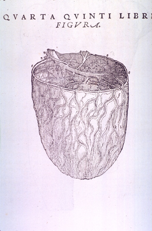 <p>Abdominal cavity with the omentum pulled back to show venous system and the intestines.</p>