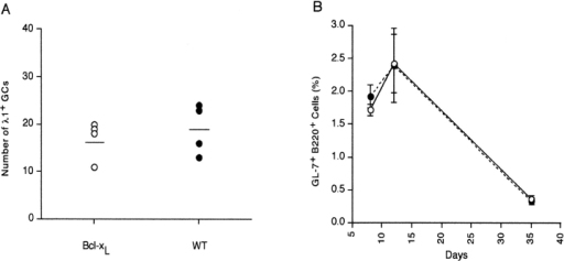 bcl-xL transgenic mice produce GC and IgG1 antibody responses that are similar to control animals. Splenocytes were recovered from transgenic mice or wild-type controls at various times after immunization with NP-CG. (A) The numbers of λ1+ GCs were determined by histological staining with anti-λ1 antibody and PNA. Each point represents the average number of λ1+ GCs per histologic section (≥3 sections representing ≈2/3 splenic area) in single transgenic (open circles) or wild-type (filled circles) mice. (B) The percentage of GC B cells in live lymphocytes was assessed by flow cytometry using anti-B220 and anti–GL-7 antibodies. Each point represents the frequency mean (± SD) of GC B cells (percentage of total lymphoid gate) in single transgenic (open circles) and control (filled circles) mice 8, 12, and 35 d after immunization. (C) Numbers of NP-specific AFCs from BM (circles) and spleen (squares) of bcl-xL transgenic (open) or littermate control mice (filled) were determined by ELISPOT using NP23-BSA as the capture antigen. Frequencies of AFCs in naive mice (day 0) from both groups were <0.2 × 10−5. (D) NP-specific serum antibody from transgenic (open) or wild-type control mice (filled) was determined by ELISA using NP23-BSA. The average values (± SD) for serum antibody concentrations from five to seven individual mice per time point are presented.