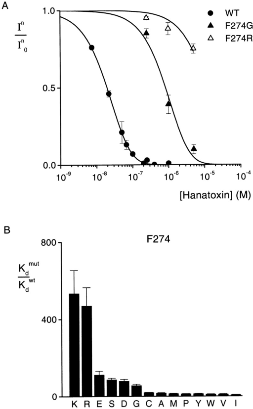 Effects of multiple substitutions at position 274 on Hanatoxin binding affinity. (A) Concentration dependence for inhibition of the wild-type and two mutant drk1 K+ channels by Hanatoxin. In/In0 is the value of I/I0 measured in the plateau phase at negative voltages (e.g., Fig. 2 C). Symbols are experimental data for the mean ± SEM of three to five cells. Solid lines correspond to In/In0 = (1 − P)4, where P = [toxin]/([toxin] + Kd), with Kd values of 103 nM, 4.4 μM, and 61.6 μM for WT, F274G, and F274R, respectively. The equation assumes four equivalent and independent toxin binding sites per channel. (B) Normalized Kd values for 14 substitutions at the position 274. Mean ± SEM (n = 3–15) for each mutant channel. The corresponding ΔΔG values are (kcal mol−1): 3.7 K, 3.6 R, 2.8 E, 2.6 S, 2.6 D, 2.4 G, 1.8 C, 1.6 A, 1.5 M, 1.5 P, 1.5 Y, 1.4 W, 1.4 V, and 1.2 I.
