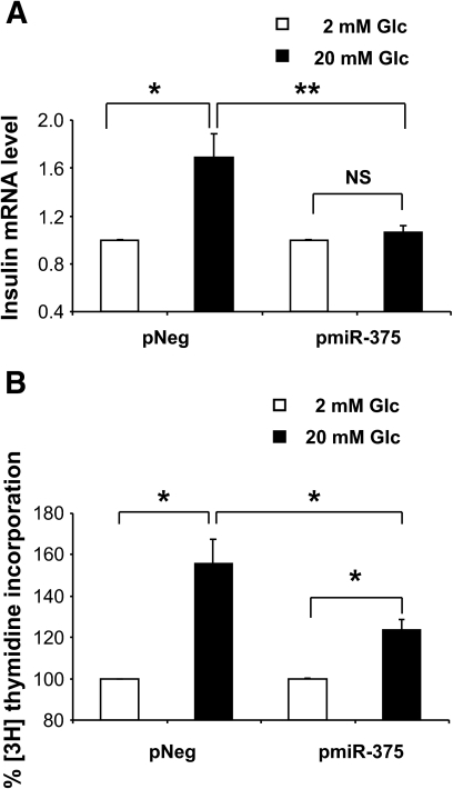 Effect of miR-375 on glucose-enhanced insulin gene expression and cell proliferation. A: Quantification of insulin mRNA. INS-1E cells were transfected as above. Forty-eight hours later, cells were starved in RPMI 1640 with 0.5% (vol/vol) FCS containing 2 mmol/l glucose for 16 h and treated with 2 or 20 mmol/l glucose for 1 h. Insulin mRNA expression was analyzed by quantitative RT-PCR and normalized to 36B4 transcript. Data represent five independent experiments carried out in triplicate, ±SE, with n = 5. *P < 0.05, **P < 0.005. B: Measurement of [methyl-3H]thymidine incorporation. INS-1E cells were transfected as above. Twenty-four hours later, cells were starved in RPMI 1640 with 0.5% (vol/vol) FCS containing 2 mmol/l glucose for 16 h and treated with 2 or 20 mmol/l glucose for 24 h, and cell proliferation was assessed by measuring [methyl-3H]thymidine incorporation. Data represent three independent experiments done in triplicate, ±SE, with n = 3. *P < 0.05.