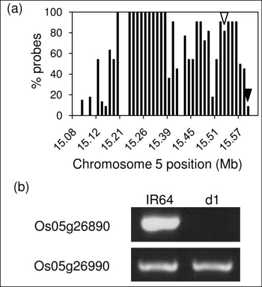 Mutant line d1 contains a ~500 kb deletion on chromosome 5 encompassing the RGA1 gene. a) Gene models in the region show a high percentage of probes with log2(mutant probe intensity/wild type probe intensity) ≤ -0.8, indicating a large deletion. b) PCR confirmation of the deletion of RGA1 (Os05g26890) relative to wild type (indicated by an open arrowhead in part a) and PCR confirmation of the right border of the deletion (Os05g26990) relative to wild type (indicated by a closed arrowhead in part a). The left border was not resolved.