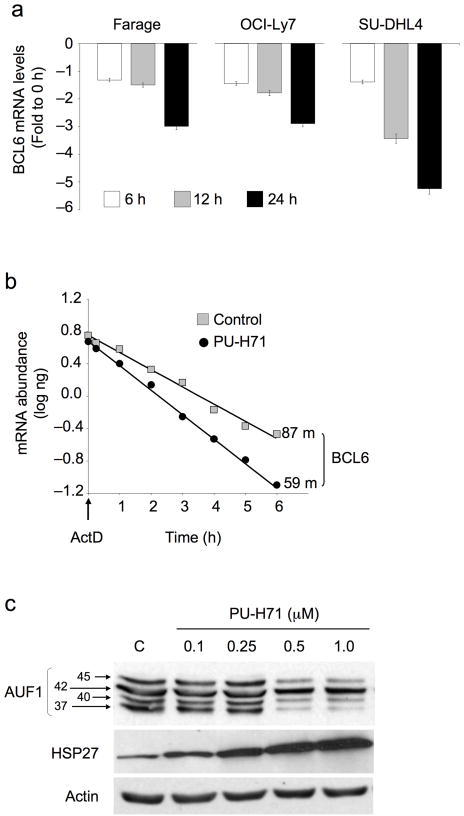 Hsp90 prevents BCL6 mRNA decay. (a) The relative abundance of BCL6 mRNA was determined by QPCR in Farage, OCI-Ly7 and SU-DHL4 cell lines at baseline and 6, 12 and 24 h after treatment with PU-H71 0.5 μM. Results are expressed as fold difference compared to baseline (time 0 h) and were normalized to GAPDH. Experiments were performed five times, each with duplicate QPCR measurements. (b) OCI-Ly7 cells were treated with PU-H71 0.5 μM or control for 2 h, followed by Actinomycin D (ActD) for the indicated times to block transcription. Bcl6 mRNA abundance was determined by QPCR using a standard curve. The plot averages three independent experiments for half-life derivation. Results are expressed as mRNA abundance (log ng) normalized to untreated cells. Bcl6 mRNA half-life in minutes is shown for both experimental conditions. (c) OCI-Ly7 cells were exposed to the indicated concentrations of PU-H71 (or control) and immunoblotted for the ARE-binding proteins p45AUF1, p42AUF1, p40AUF1, p37AUF1 and Hsp27. Actin was used as a control.