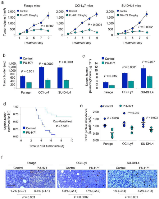 PU-H71 suppresses DLBCL xenografts. (a) Tumor growth plots in Farage, OCI-Ly7 and SU-DHL4 xenografted mice treated with control (blue circles) or PU-H71 at 75 mg per kg body weight per day (green circles) for 10 consecutive days. The Y-axis indicates tumor volume (in mm3) and X-axis days of treatment. The P values represent the comparison of tumor volumes at day nine by T-test. (b) Tumor burden (in mg) at day ten in control (blue bars) and PU-H71 at 75 mg per kg body weight per day (green bars) treated Farage, OCI-Ly7 and SU-DHL4 mice. (c) Serum levels of human β2-microglobulin (in μg ml-1) at day 10 in control (blue bars) and PU-H71 at 75 mg per kg body weight per day (green bars) treated Farage, OCI-Ly7 and SU-DHL4 mice. (d) Kaplan-Meier survival curves for the pooled mice treated with control (blue line) and PU-H71 75 mg per kg body weight per day (green line) treated mice. (e) The relative abundance of Bcl6 protein (to actin) was determined by immunoblotting lysates from Farage, OCI-Ly7 and SU-DHL4 xenografts. Circles (blue for control, green for PU-H71) represent the densitometry values (in arbitrary units) of Bcl6 to actin. Bars represent the mean for each group. P values were obtained by T-test comparisons. (f) Representative images from Farage, OCI-Ly7 and SU-DHL4 mice tumors after being treated with control or PU-H71 75 mg per kg body weight per day and assayed for apoptosis by TUNEL. The number of apoptotic cells over total cells and the statistical significance are shown at the bottom. The bar represents 100 μm.