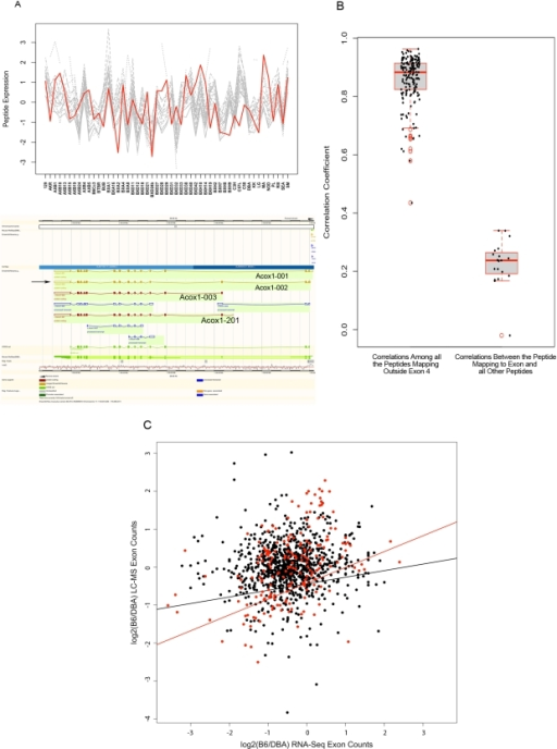 Isoform-specific analysis of peptide data. A) An example of differential regulation of isoforms detected in the LC-MS data. Top panel, comparison of similarity in expression variation of 20 peptides measured for Acox1. Grey plots illustrate the expression variation among inbred mice for 19 peptides which represent all four Acox1 isoforms. Red plot illustrated the expression profile of the peptide representing the isoforms skipping exon 4. Bottom panel, Ensembl genome browser's schematic representation of four Acox1 isoforms. Arrow points to Acox1-002 isoform which skips exon 4. B) Concordance between Acox1 peptides. The left boxplot depicts correlations among peptides that include Acox1-002 isoform. The right boxplot depicts correlations between the peptide mapping to exon 4 and all other peptides. The scatter points overlaid on each boxplot represent the pair-wise correlation values. C) Exon level analysis of peptide measurements by LC-MS and transcript measurements as measured by NGS in the livers of the B6 and DBA inbred strains. The black dots depict the relationships examined by comparing peptide data to microarray data and the red dots represent the highly significant relations found by peptide comparison with the microarray data. The lines depict the best fit as predicted by linear regression (black line = regression of all peptides, red line = regression of highly significant peptides).