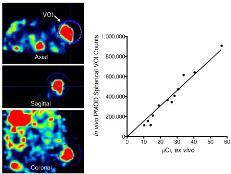 Pinhole micro-SPECT/CT image analysis versus ex vivo quantitation of BxPC-3 tumors 3 days post-infection with an oncolytic measlesvirus encoding NIS. A single spherical volume of interest (VOI) was drawn around each tumor and the activity determined with PMODimaging software. Immediately following imaging, tumors were excised and counted in a dose calibrator.