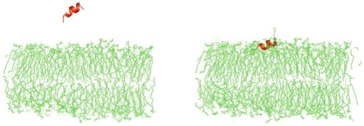 AMP- bacterial membrane interaction studied by molecular dynamic simulations.EC5 was simulated with a POPE∶POPG membrane bilayer model using the Cluspro 2.0 and Hex protein docking server. PDB files generated were visualized using PYMOLv0.99.