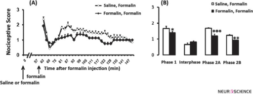 Time scores of formalin induced nociceptive behaviours (mean ±S.E.M. of 7–8 rats per group) following salineformalin or formalin-formalin injection measured every 3 minutes for 150 minutes (A) and bar chart for them (B). The columns represent the mean of nociceptive score in each phase: phase 1 (1–7), interphase (8–14), phase 2A (15–60) and phase 2B (61–90), (B). Recording of the nociceptive behaviours began immediately after second injection (time 0) and was continued for the next 90 minutes. * P<0.05; ** P<0.01 and *** P<0.001 in comparison with saline-formalin group.