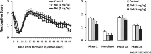 Time scores of formalin induced nociceptive behaviours (mean ±S.E.M. of 7 to 10 rats per group) following naloxone injection measured every 3 minutes for 90 minutes (A) and bar chart for them (B). The columns represent the mean of nociceptive score in each phase: phase 1 (1–7), interphase (8–14), phase 2A (15–60) and phase 2B (61–90), (B). Recording of the nociceptive behaviours began immediately after formalin injection (time 0) and was continued for 90 minutes.