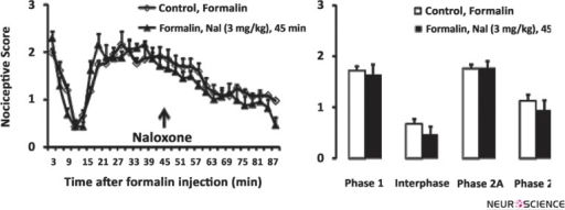 Time scores of formalin induced nociceptive behaviours (mean ±S.E.M. of 7 or 8 rats per group) following naloxone injection in 45 minutes after formalin injection measured every 3 minutes for 90 minutes (A) and bar chart for them (B). The columns represent the mean of nociceptive score in each phase: phase 1 (1–7), interphase (8–14), phase 2A (15–60) and phase 2B (61–90), (B). Recording of the nociceptive behaviours began immediately after formalin injection (time 0) and was continued for 90 minutes.