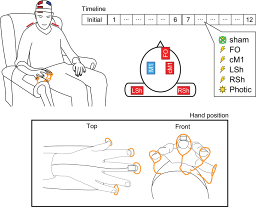 Experimental design depicting schematic illustrations of the tACS electrode montages and exemplar hand position adopted for recording of physiological postural tremor via accelerometry. The primary stimulating electrode was placed over left primary motor cortex, M1, along with four return electrode positions: fronto-orbital, FO; contralateral M1, cM1; left shoulder, LSh; and right shoulder, RSh. The Timeline shows the repeated measures sham-controlled study design; after an initial 360 s tremor recording to ascertain the participant's peak tremor frequency, the order of the six conditions (4 tACS conditions, photic stimulation, and sham condition) was randomized into two cycles of six 180 s experimental blocks, each separated by a 30 s rest period.