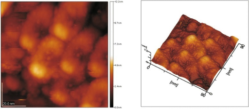 AFM image of HAP samples obtained at the temperature of 700°C. The particle size of the apatite is 40 nm. There is a horseshoe shape of the particles. Image size is 90.0 × 90.0 nm; image height is 12.2 nm.