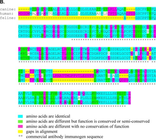 Conservation of TCII and TCII-R amino acid sequence homology between human and canine and between human and feline speciesSequences are illustrated using the 2014 Ensembl Comparative Genomics Orthologue alignments. (A) TCII amino acid sequence. (B) TCII-R amino acid sequence.