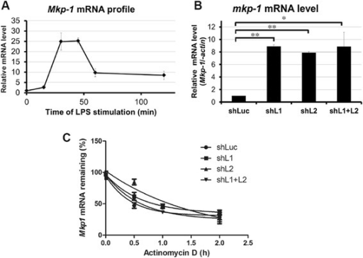 Induction of Mkp-1 mRNA early during LPS stimulation is post-transcriptionally modulated by Zfp36l1 and Zfp36l2. a mRNA expression profile of Mkp-1 in RAW264.7 cells stimulated with LPS for 0, 15, 30, 45, 60, or 120 min. b Levels of Mkp-1 mRNA in different knockdown cells after LPS stimulation for 15 min. RNA was isolated and performed the real-time PCR analysis. c Analysis of Mkp-1 mRNA half-life in different knockdown cells after LPS stimulation for 15 min. Actinomycin D (10 μg · mL-1) was added to stop transcription after 0, 10, or 20 min. The remaining mRNA was detected by quantitative PCR. Mkp-1 mRNA half-life was calculated by exponential regression, 32 min, 55 min, 68 min, and 42 min in control, Zfp36l1, Zfp36l2, and dual-knockdown cells, respectively. All of experiments were carried out at least three times