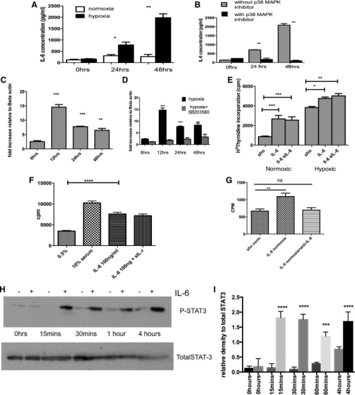 p38 MAPKα inhibition reduces interleukin (IL)-6 generation and signaling as a potential mechanism for beneficial effects in PH. A and B: supernatant from normoxic and hypoxic PAF ± SB203580 was analyzed using a quantitative ELISA to determine actual amounts released. Cells were growth arrested in serum free media for 24 h before hypoxic exposure. The values are mean ± SE values from triplicate wells for each sample and experiment repeated 3 times using cells from 3 animals. *P < 0.05 **P < 0.005. C: PAF were exposed to hypoxia and then RNA isolated after 48 h. The RNA was reverse transcribed into cDNA and then analyzed using quantitative (q)RT-PCR. The mRNA increased and peaked at 12 h of hypoxia. Values represent ratio of increase of IL-6 gene mRNA relative to the housekeeping gene of β-actin and calculated using comparative Ct method. Values are representative of triplicate samples from 3 experiments using 3 different animals. D: PAF were exposed to hypoxia in the presence of SB203580 and then RNA isolated after 48 h. The RNA was reverse transcribed into cDNA and then analyzed using qRT-PCR. The mRNA increased and peaked at 12 h of hypoxia. Values represent ratio of increase of IL-6 gene mRNA relative to the housekeeping gene of β-actin and calculated using comparative Ct method. Values are representative of triplicate samples from 3 experiments using 3 different animals. **P < 0.01; ***P < 0.01, for C and D. E: PAF were isolated and incubated with IL-6 (100 ng/ml) ± soluble IL-6 receptor (sIL-6) and then using DNA synthesis as a marker of cell proliferation, the response was observed. Data are mean values ± SE and are representative of duplicate experiments performed on cells from 3 different animals. *P < 0.05; **P < 0.005; ***P < 0.0001. F: PASMCs were exposed to IL-6 (100 ng/ml) ± soluble IL-6 receptor (sIL-r) and then using DNA synthesis as a marker of cell proliferation, the response was observed. Data are means ± and are representative of duplicate experiments performed on cells from 3 different animals. ****P < 0.0001. G: PASMCs were growth arrested for 24 h and then incubated with serum free media, IL-6 or IL-6 and anti-IL-6 antibody. Thymidine assay was used to quantify DNA synthesis, a measure of cell proliferation. Results are plotted as counts per million. Values are means ± SE and represent mean of 3 experiments on cells from same animal. A total of 3 different animals were used. **P < 0.01. H and I: PASMCs were stimulated with 100 ng/ml IL-6 (+) or without (−) and the protein harvested at baseline, 15 min, 30 min, 1 h, and 4 h. The cell lysates were immunoblotted for phosphorylated STAT3 and total STAT3. Experiment was repeated 3 times; blots above are representative of those experiments. H shows densitometry from repeat blots. ***P < 0.005; ****P < 0.001, for I.