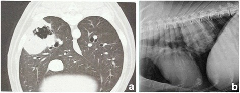 Metronomic chemotherapy with patient alkalization in a 15 year old mixed breed with lung carcinoma. a Tumor appearance at presentation (CT scan imaging). b Tumor appearance after 14 months of therapy (thoracic radiograph imaging)