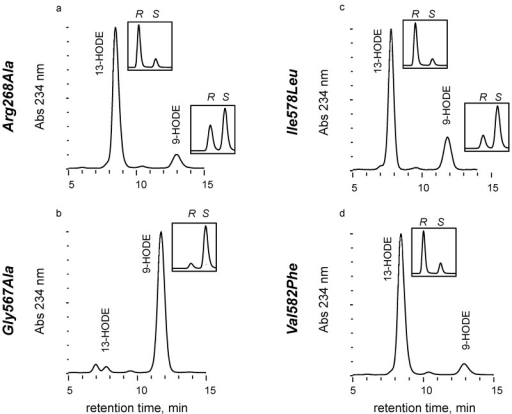 HPLC analysis of hydroxy fatty acids formed by MdLOX1a mutants followed by chemical reduction. Product profiles for LOX activity with linoleic acid were obtained via SP-HPLC. Ratios of (R)- and (S)-enantiomers were determined by CP-HPLC (insets). (a) Arg268Ala mutant. (b) Gly567Ala mutant. (c) Ile578Leu mutant. (d) Val582Phe mutant. A LiChrospher® 100 Diol column (125×4 mm, 5 µm) was eluted at 2 mL min-1 with hexane/2-propanol/formic acid (100:2:0.1, by vol.) with UV detection at 234 nm. Chiral phase HPLC analysis of enantiomer composition was conducted on a Chiralpak® IA column (250×4.6 mm, 5 µm) with an elution at 0.75 mL min−1 in hexane/ethanol/acetic acid (95:5:0.02, by vol.) and UV detection at 234 nm.