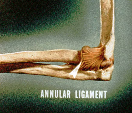 annular ligament