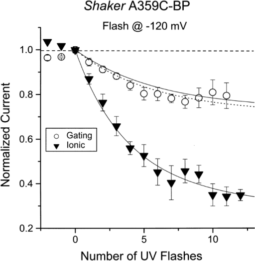 Relative reduction of peak gating current and ionic current for Shaker-IR A359C-BP Same as for Fig. 3, except using flash-lamp stimulation and measuring the ionic current at +70 mV. Solid curves are the best fit to an independent model (see ). The dashed line shows the predicted gating current reduction for a model including cooperativity (fcoop = 0.045). Data for n = 5 cells are shown.