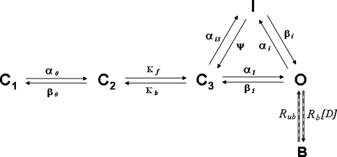 State diagram of the IKr Markov model structure. Arrows refer to transitions between states. The rate constants are shown above (below) the arrows