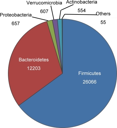 Gut Bacteria Compositione Pie Chart Shows The Distri Open I
