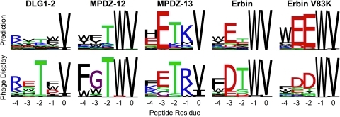 "PDZ/peptide interface tolerance predictions.Shown are 5 representative examples of predictions with the generalized protocol, compared to experimental data from phage display. The Erbin V83K interface prediction involved making the indicated point mutant (V83K) to the PDZ domain prior to backrub ensemble generation (an example of a ""premutated"" position)."